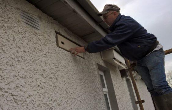 Swift box installation at Dermot Doran's home in Kildare.