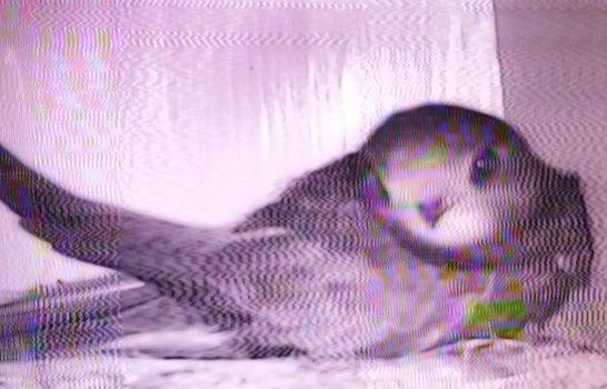 First bird back 2017 by Matt Wheeler
