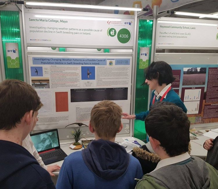 Seoirse Swanton at the BT Young Scientist Exhibition 3